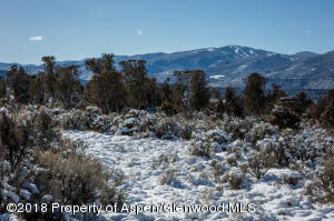 Pinon and Junipers covered in snow