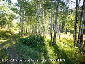 Lush Aspen groves