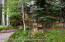 27 Timber Ridge, Snowmass Village, CO 81615