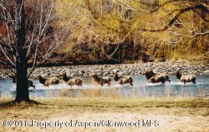 elk in river