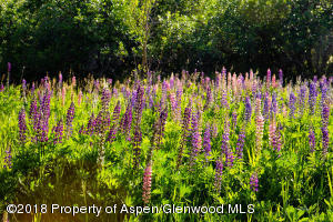 Beautiful Lupine Fields on Property