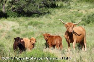 Highlander Cattle