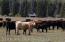 Cattle near headquarters