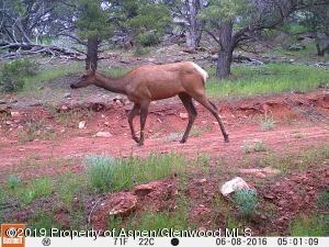 TBD Deer Park Court, Glenwood Springs, CO 81601