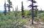 Typical vegetation along block 21.jpg