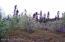 typical vegetation on block 15.jpg