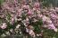 Multiple flowering trees and shrubs in yard.