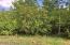 Good Birch trees