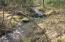 Little Meadow Creek