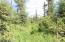C28 Alaskan Wildwood Ranch(r)  (4)