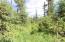C28 Alaskan Wildwood Ranch(r)  (5)