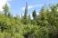 C28 Alaskan Wildwood Ranch(r)  (10)