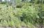 C28 Alaskan Wildwood Ranch(r)  (13)