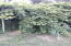 more shrubery