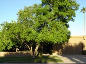 5719 N 79 Way, Scottsdale, AZ 85250