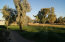 View Of Arroyo #2 Green