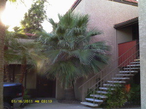 1730 W EMELITA Avenue, 1104, Mesa, AZ 85202