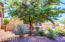 Mature mature tree and easy to maintain desert landscaping!