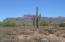 Less than 1/4 mile down the road is Tonto National Forest.