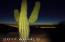 Saguaro Lined Mountains