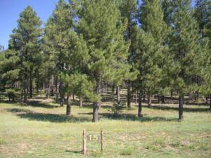 17595 S OSPREY Circle Lot 15, Munds Park, AZ 86017