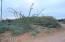 Natural desert beauty