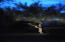 Uplighting in backyard