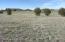 415 S Rolling Hills Road, 4, Young, AZ 85554