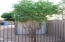 EAST SIDE OF THE HOUSE HAS LOCKED POWDER COATED FENCE IN FRONT OF THE TANGERINE TREE, ORANGE TREE AND WALK IN SHED.