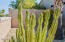 Well landscaped with a combination of desert plants