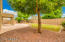 Mature shade tree and easy care landscape