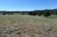 Back yard meadow