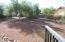 Backyard 1a