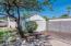 Mature mesquite tree.