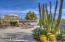 Specimen cactus