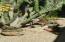 25150 N WINDY WALK Drive, 44, Scottsdale, AZ 85255