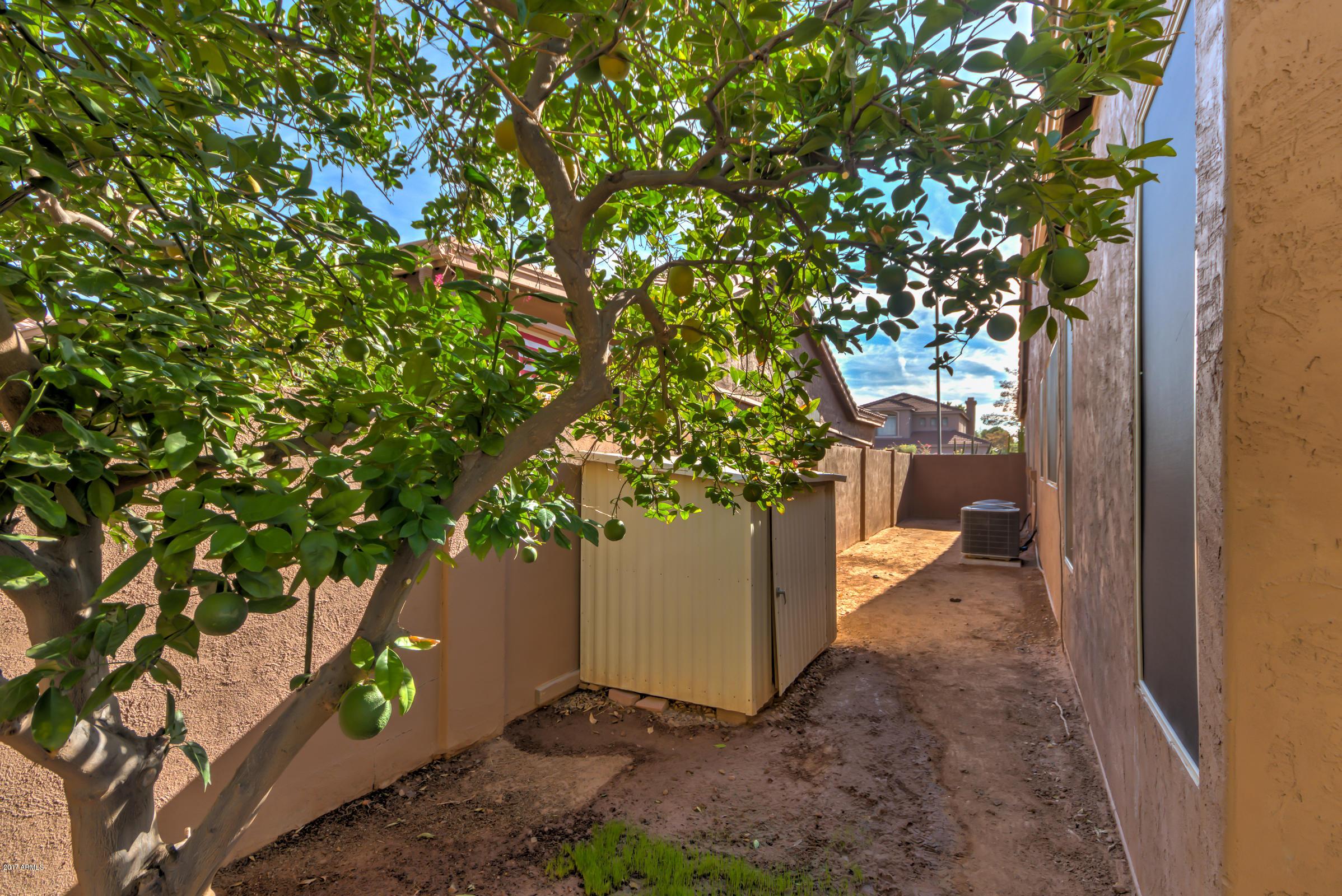 304 S Ironwood  Street Gilbert, AZ 85296 - img44