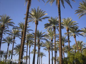 Driving into this date palm grove on 44th St near the canal is like driving into an oasis in the heart of the city.