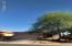 Mature mesquite tree
