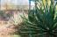 Desert Cacti landscape