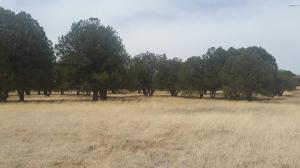 49969-B N AZ HIGHWAY 288 Highway, 0, Young, AZ 85554