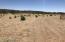 Huge pasture