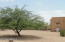 One of the many beautiful Mesquite trees on the property.