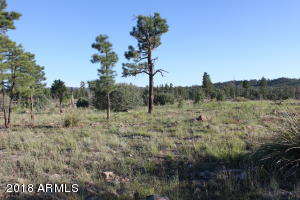 TBD Capps Meadow Road, Pinedale, AZ 85934
