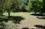 Backyard looking west; orange, tangelo, lime, grapefruit, & apple trees