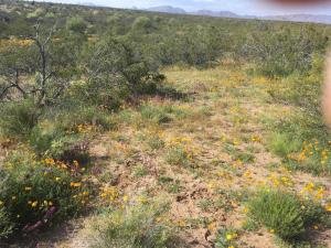 21950 W EL GRANDE Trail, 6