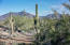 Desert View from Backyard