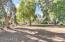 provides shade and creates a park-like setting.