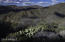 43000 N Fleming Springs Road, Cave Creek, AZ 85331