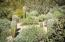 The rear of the home has a wonderful open area of natural desert with about 18 baby saguaros growing in various stages!